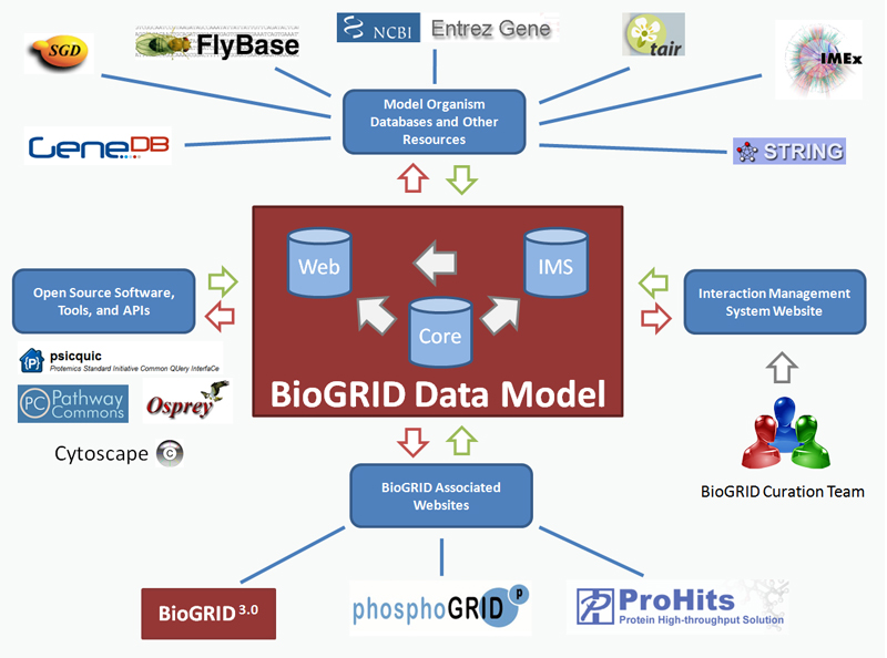 BioGRID Architecture and Data Model   BioGRID